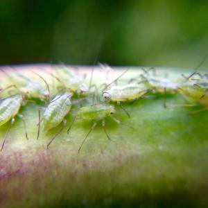 Pesticides & Fungicides