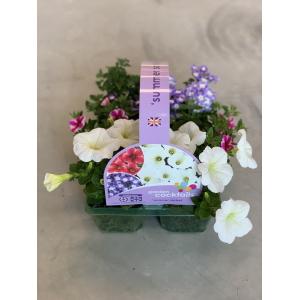 Garden Cocktail Designer Mix Jumbo 6 pack