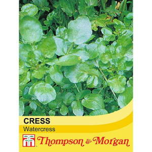 Cress Watercress