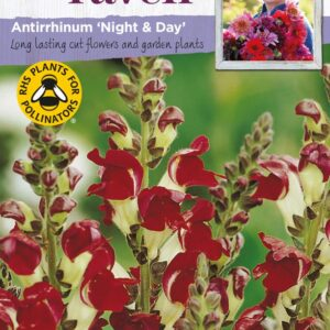 Antirrhinum Night+Day SR CF
