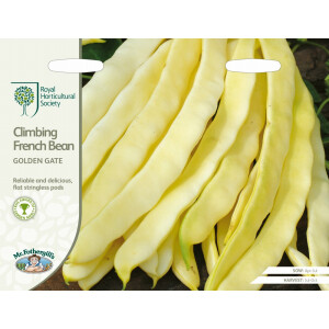 Climbing French Bean Golden Gate Rhs