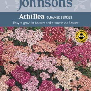 Achillea Summer Berries JAZ