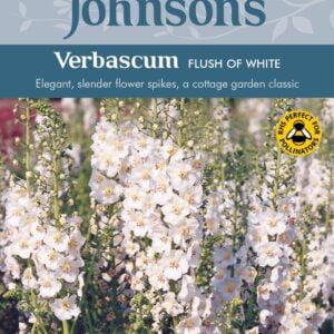 Verbascum Flush of White JAZ