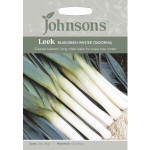 Leek Bluegreen Winter Tadorna JAZ