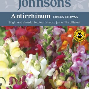 Antirrhinum Circus Clowns JAZ
