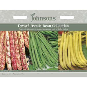 Dwarf French Bean Collection Jaz