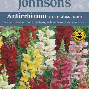 Antirrhinum Rust Resistant Mixed JAZ