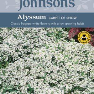 Alyssum Carpet of Snow JAZ