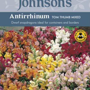Antirrhinum Tom Thumb Mixed JAZ