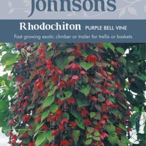Rhodochiton Purple Bell Vine JAZ