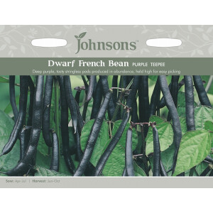 Dwarf French Bean Purple Teepee Jaz