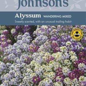 Alyssum Wandering Mixed JAZ