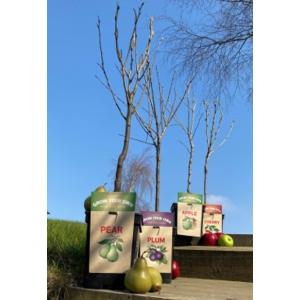 Patio Cherry Stella 23cm Pot