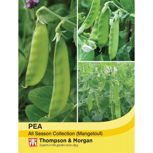 Mangetout Pea Mix All Season