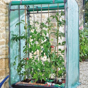 Tomato Growing Bundle