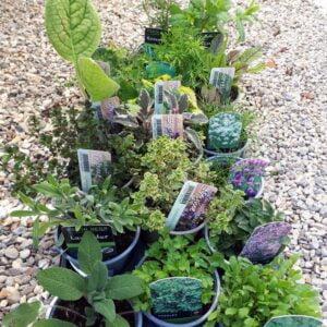 Herb 9cm Pot Bundle