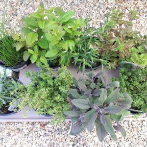 Herb 1L Pot Bundle