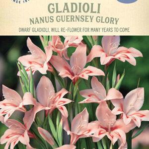 Gladioli Nanus Guernsey Glory