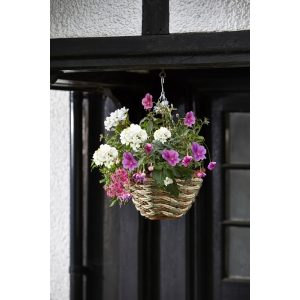 Trinity Hanging Basket 12in