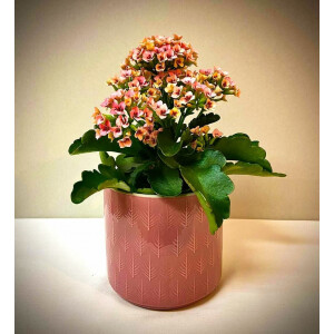 Leaf Embossed Pink Pot Cover 13cm