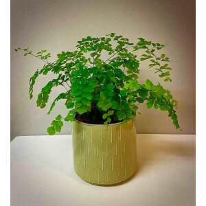 Leaf Embossed Soft Green Pot Cover 13cm
