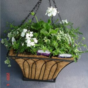 Planted Square Black Metal 12inch Hanging Basket