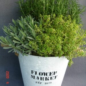 Herb Planted Container