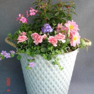 Summer Mixed Planted Container Large