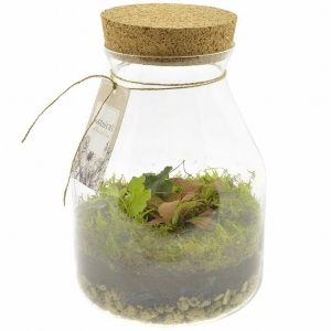 Mini Indoor Garden Glass Terrarium 1