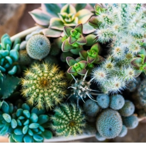Cacti & Succulent Collection