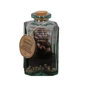 Glass Bottle Botanical Terrarium