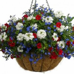Hanging Basket Georgian – Red, White and Blue 12 Inch