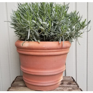 Florence Terracotta Planter 20cm
