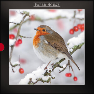 Pack of 16 Luxury Darkroom Robin Redbreast Christmas Cards