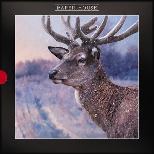 Pack of 16 Luxury Darkroom Winter Stag Christmas Cards