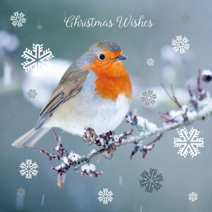 20 Assorted Robins Christmas Cards