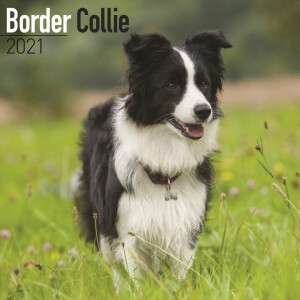 Border Collie 2021 Calendar