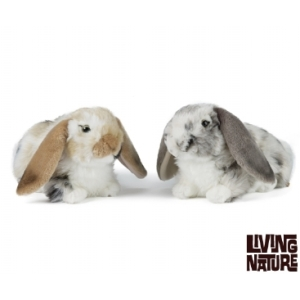 Dutch Lop Eared Rabbit From Living Nature