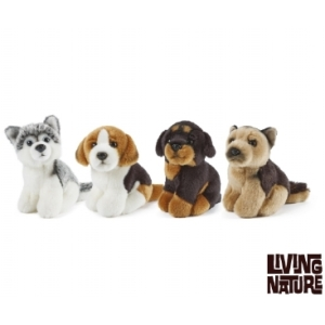 Minature Dogs From Living Nature