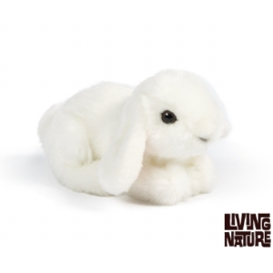 Small Lop Eared Bunny From Living Nature