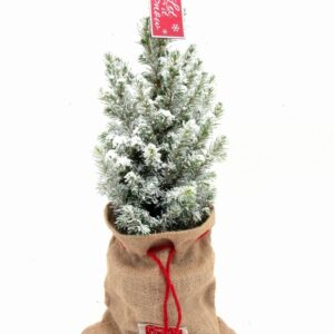 My First Christmas Tree with hessian and Snow