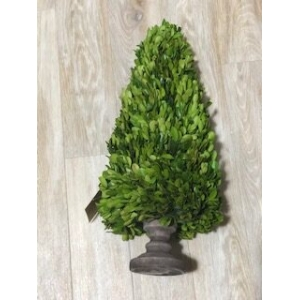 24cm tall buxus cone in pot