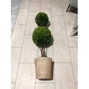 130cm tall buxus double ball in pot