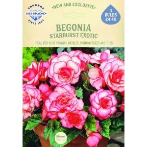 Begonia Starburst Exotic