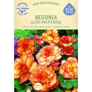 Begonia Aztec Gold Exotic