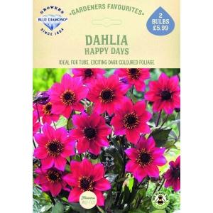 Dahlia Happy Days