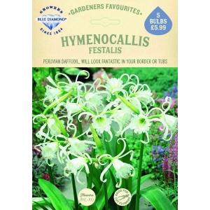 Hymenocallis Festalis