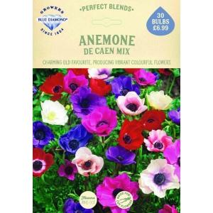 Anemone De Caen Mix