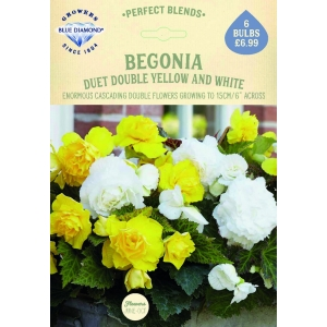 Begonia Duet Double Yellow+White