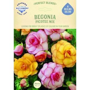 Begonia Picotee Mix